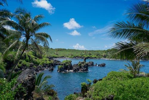 Základová fotografie zdarma na téma havaj, venkovní výzva