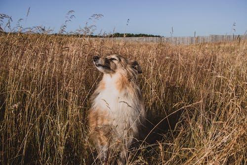 動物, 可愛, 可愛的 的 免费素材图片