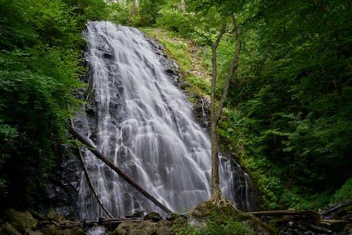 Foto stok gratis alam, aliran, hutan, indah