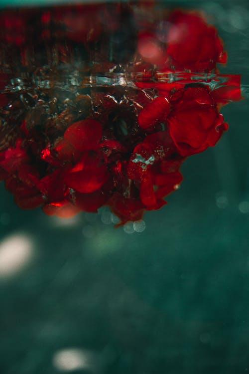 Red Flower Petals in Water