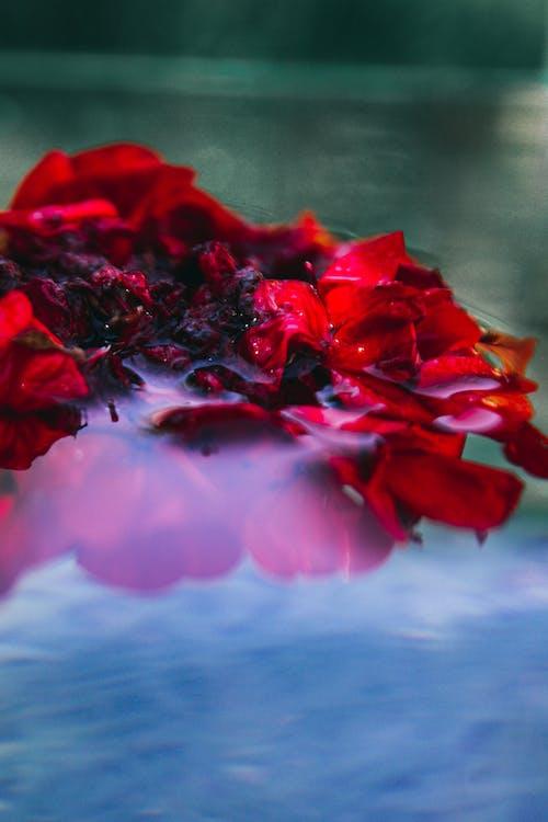 Free stock photo of florarium