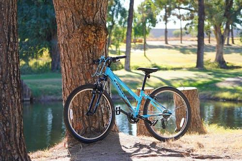 Photo of a Sky Blue Mountain Bike Parked Near a Tree