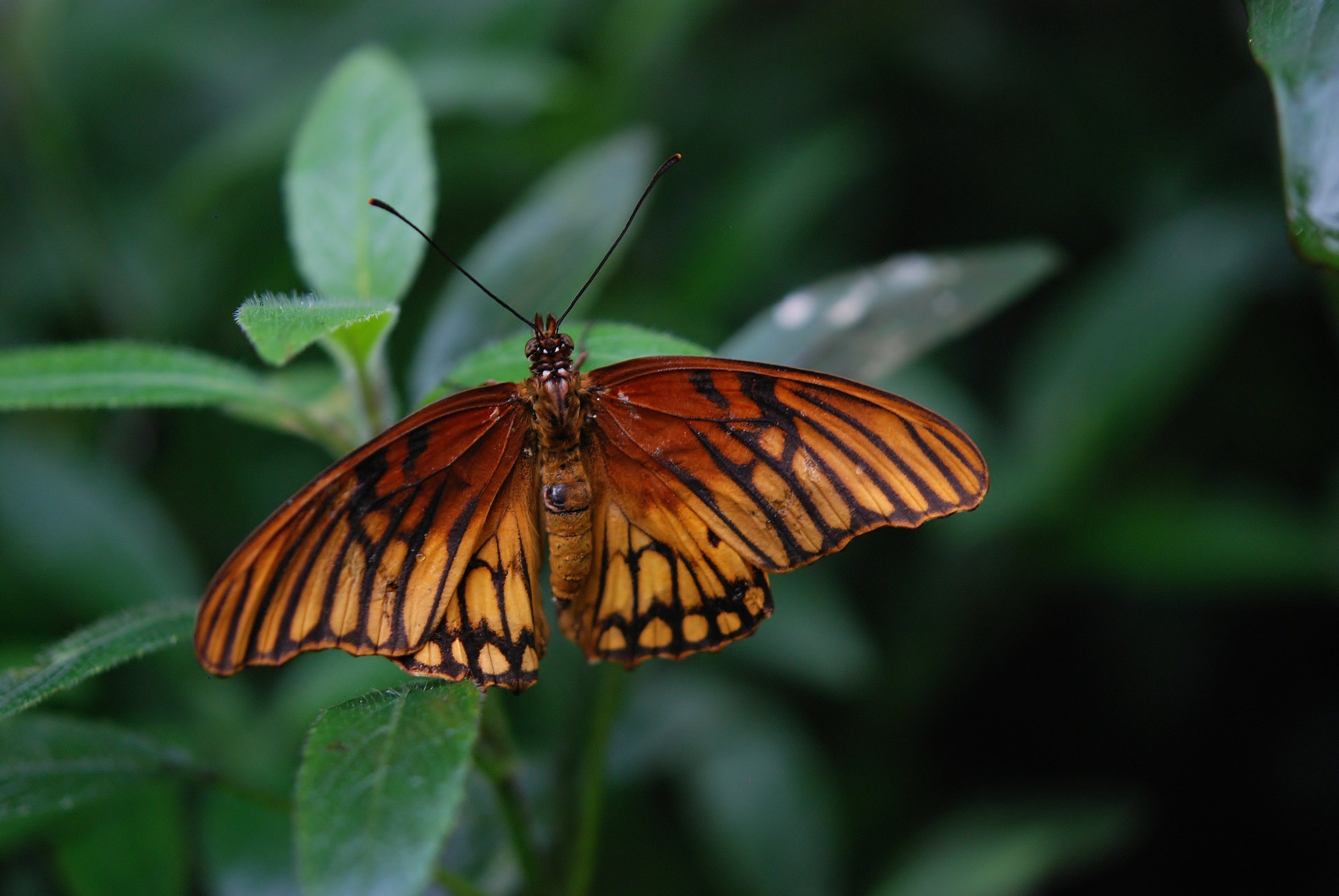 Základová fotografie zdarma na téma hmyz, makro, motýl, zblízka