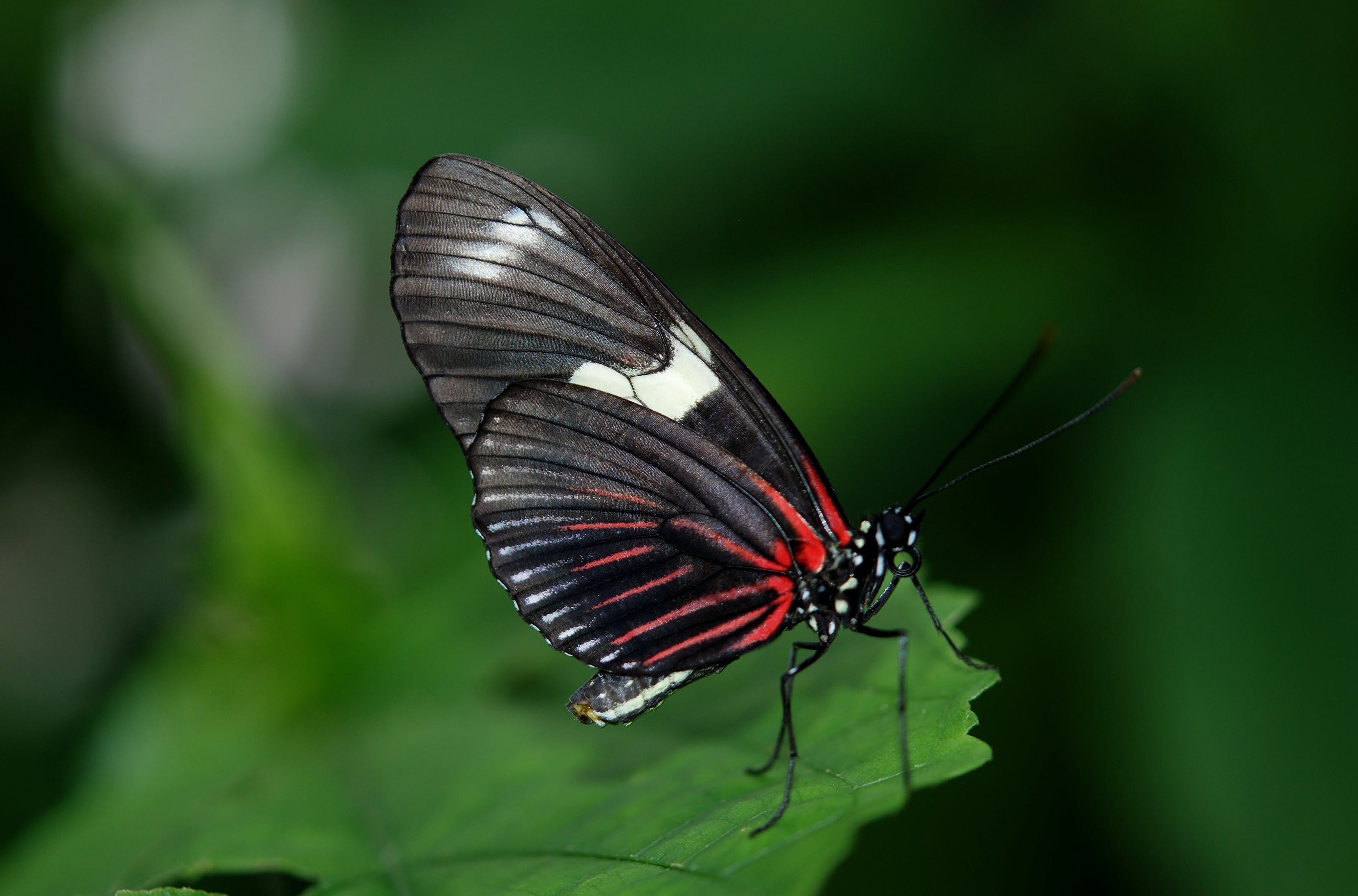 Gratis lagerfoto af close-up, insekt, makro, sommerfugl