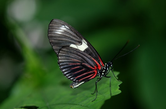 Black and Red Butterfly on Green Leaf