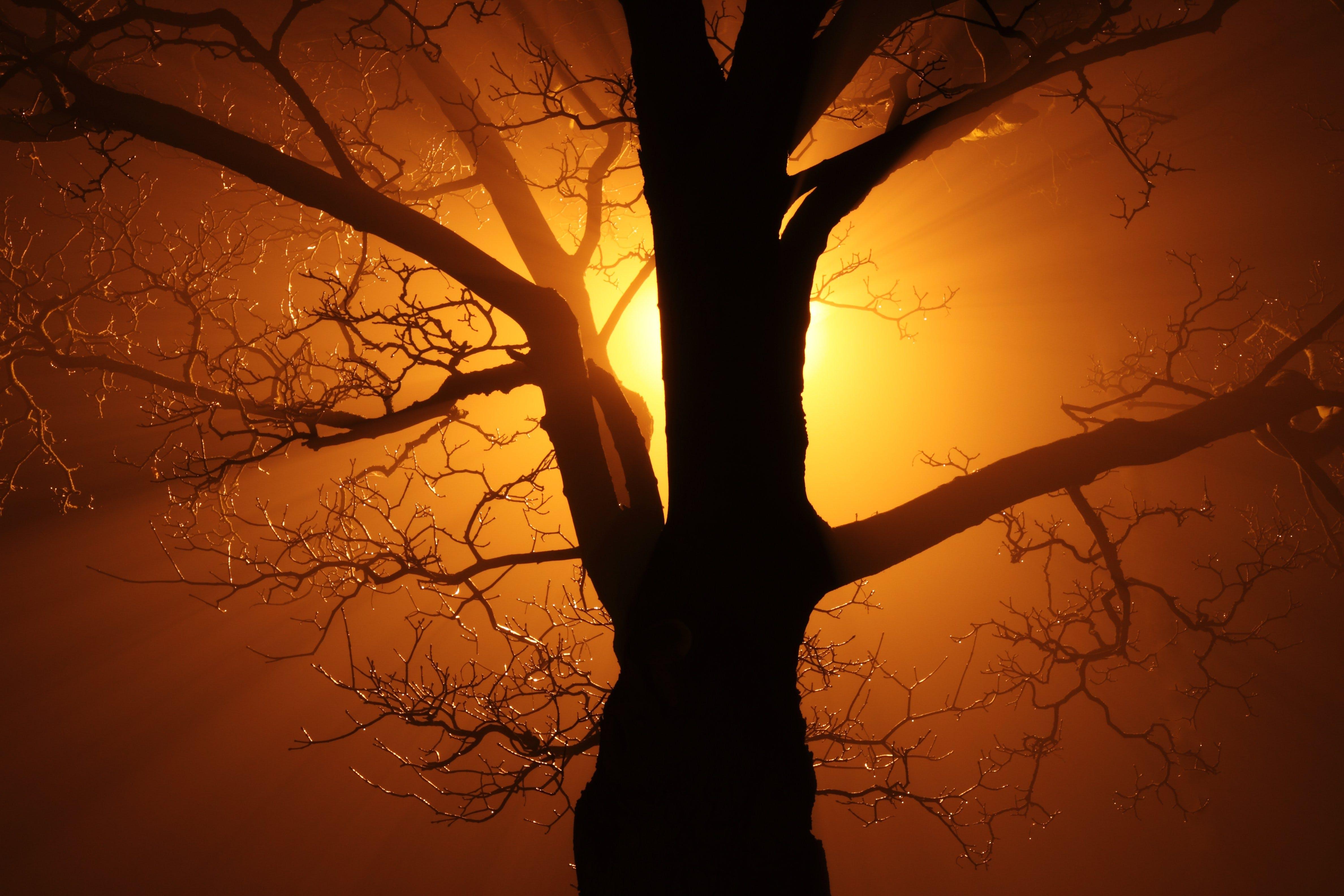 Silhouette of Bare Tree Against Sunlight