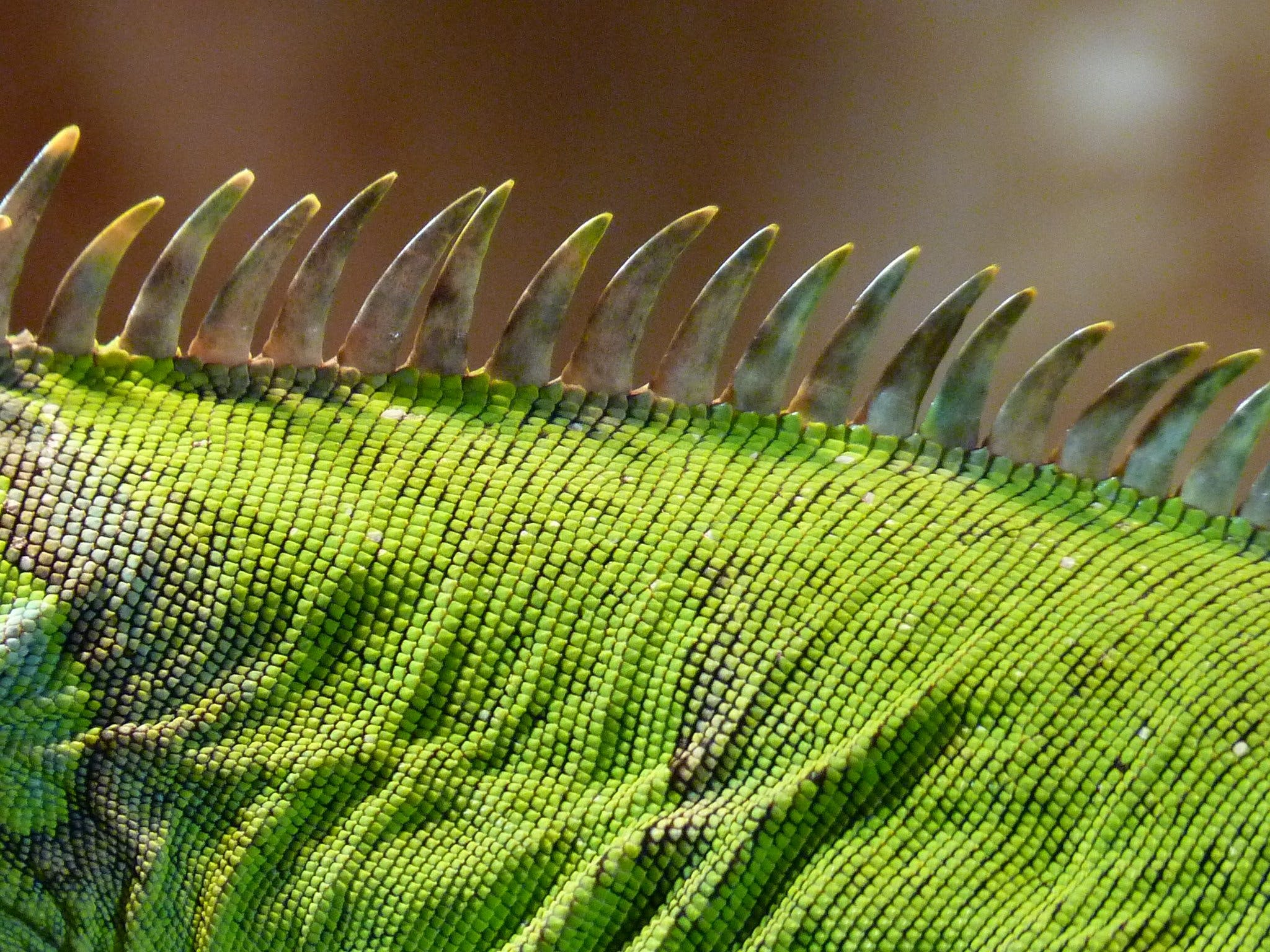 Shallow Focus Photography of Green and Black Animal Skin during Daytime
