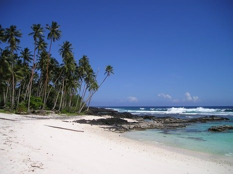 Green Palm Tree Near Beach Under Clear Blue Sky