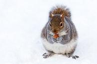 snow, winter, animal