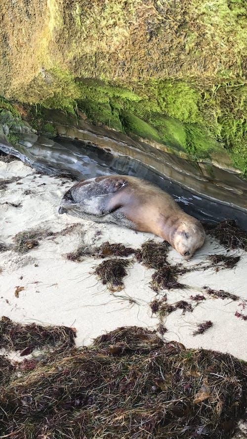 Foto profissional grátis de foca, leão-marinho, litoral