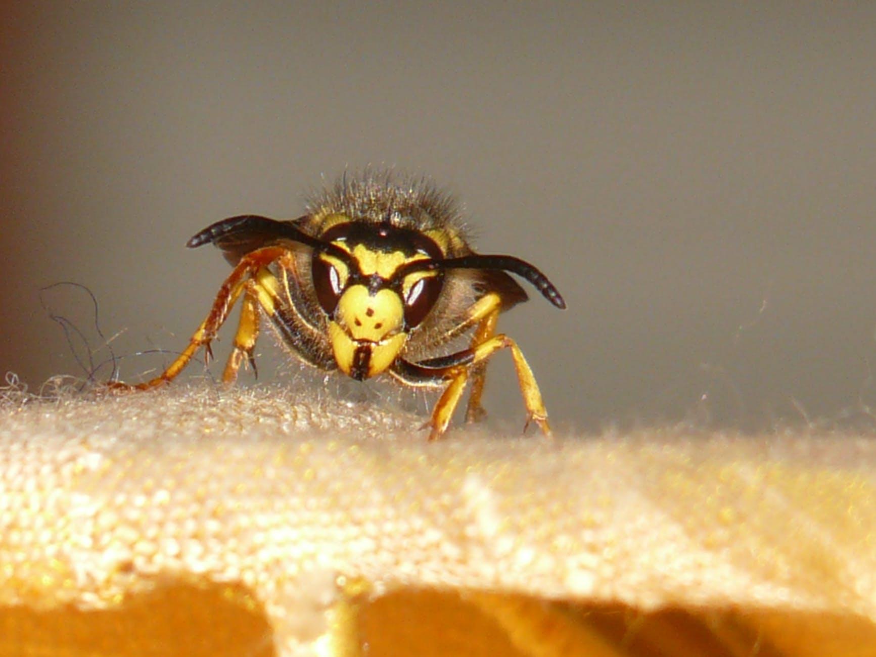 Yellow and black bee on orange textile