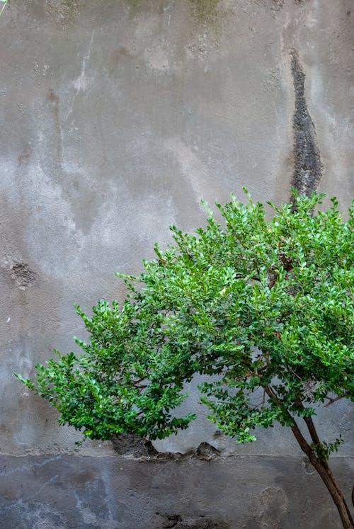 Free stock photo of minimalism, muro, tree