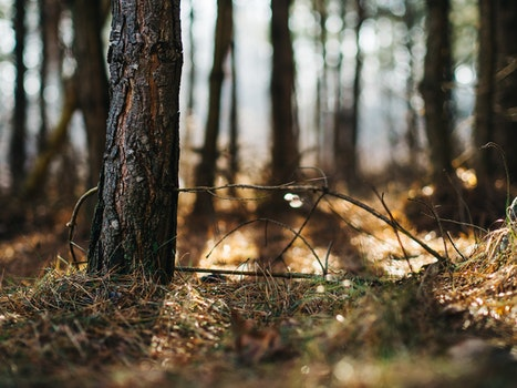 Free stock photo of nature, forest, grass, tree