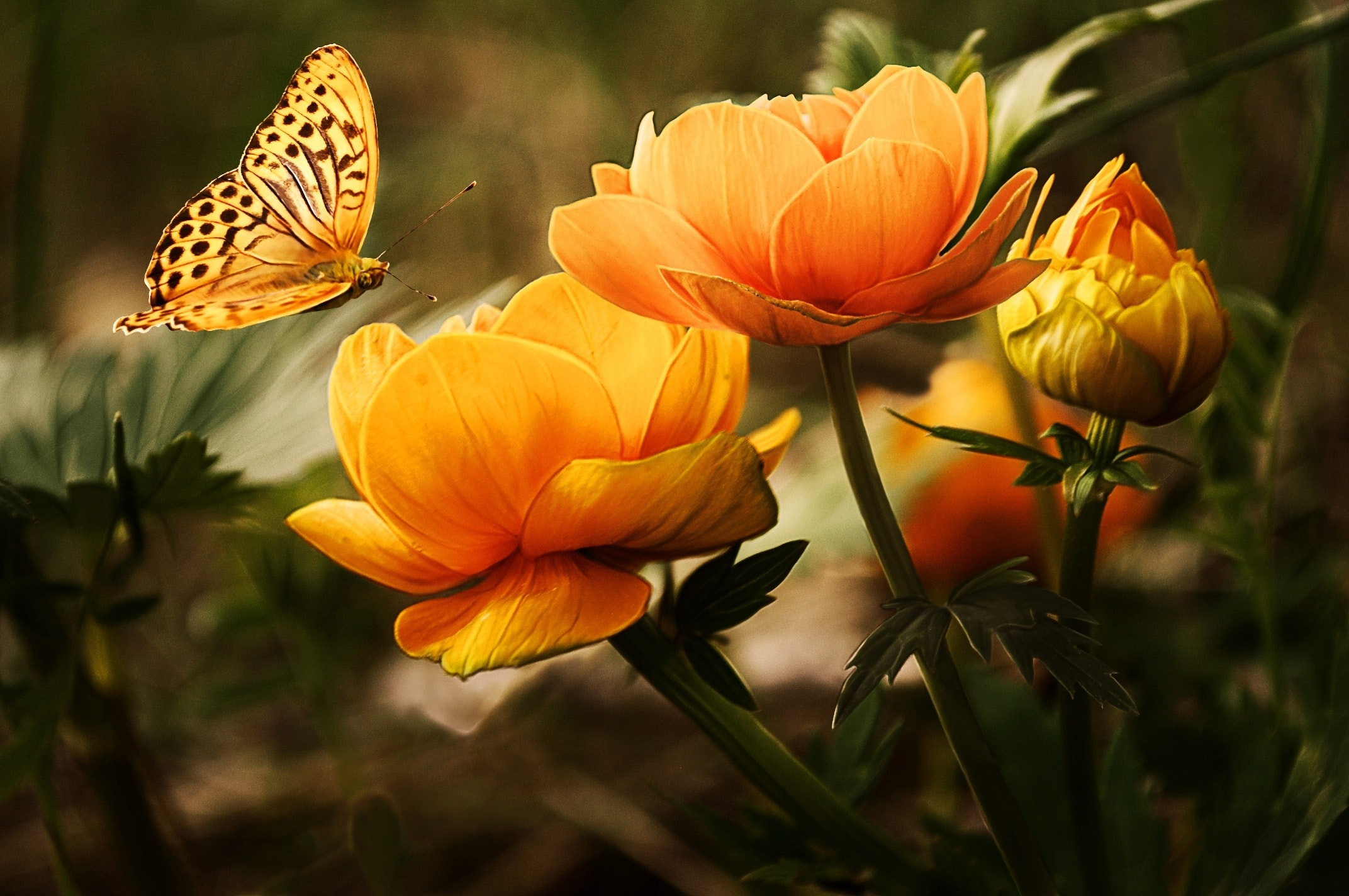 Orange Flower With Butterfly Free Stock Photo