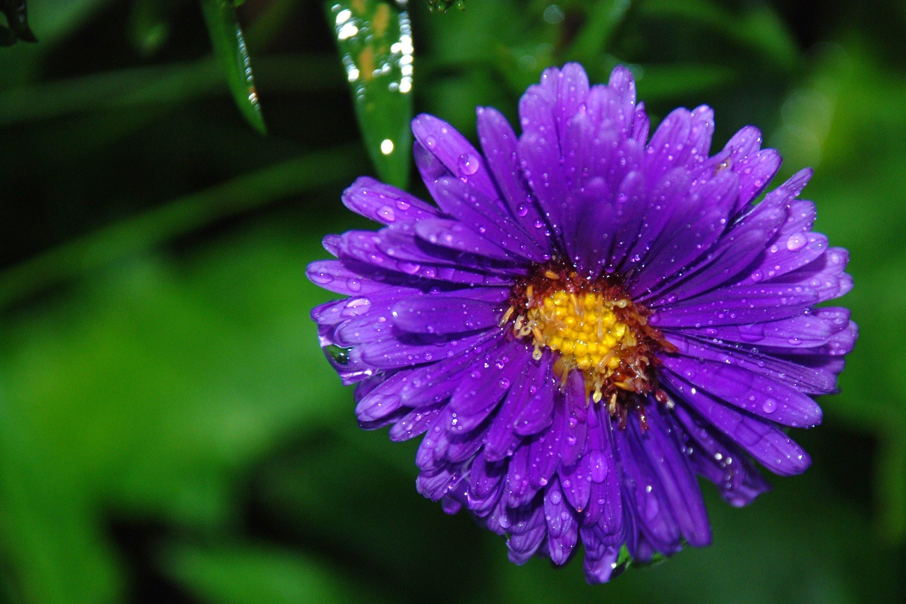 HD 바탕화면, 매크로, 식물군, 클로즈업의 무료 스톡 사진