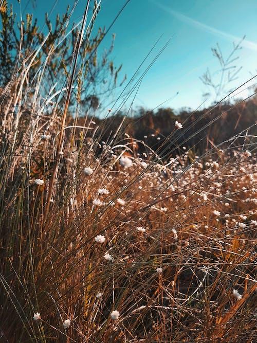 Foto stok gratis alam, bunga musim panas, bunga-bunga indah