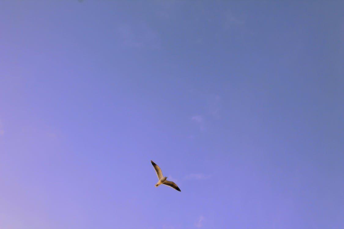 Δωρεάν στοκ φωτογραφιών με ουρανός, πέταγμα, πετάω