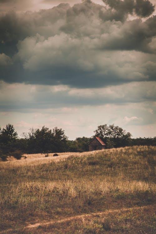 campo, forma di nuvole, nuvole
