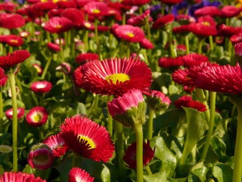 Imagine de stoc gratuită din centrale, floră, flori, înflorire