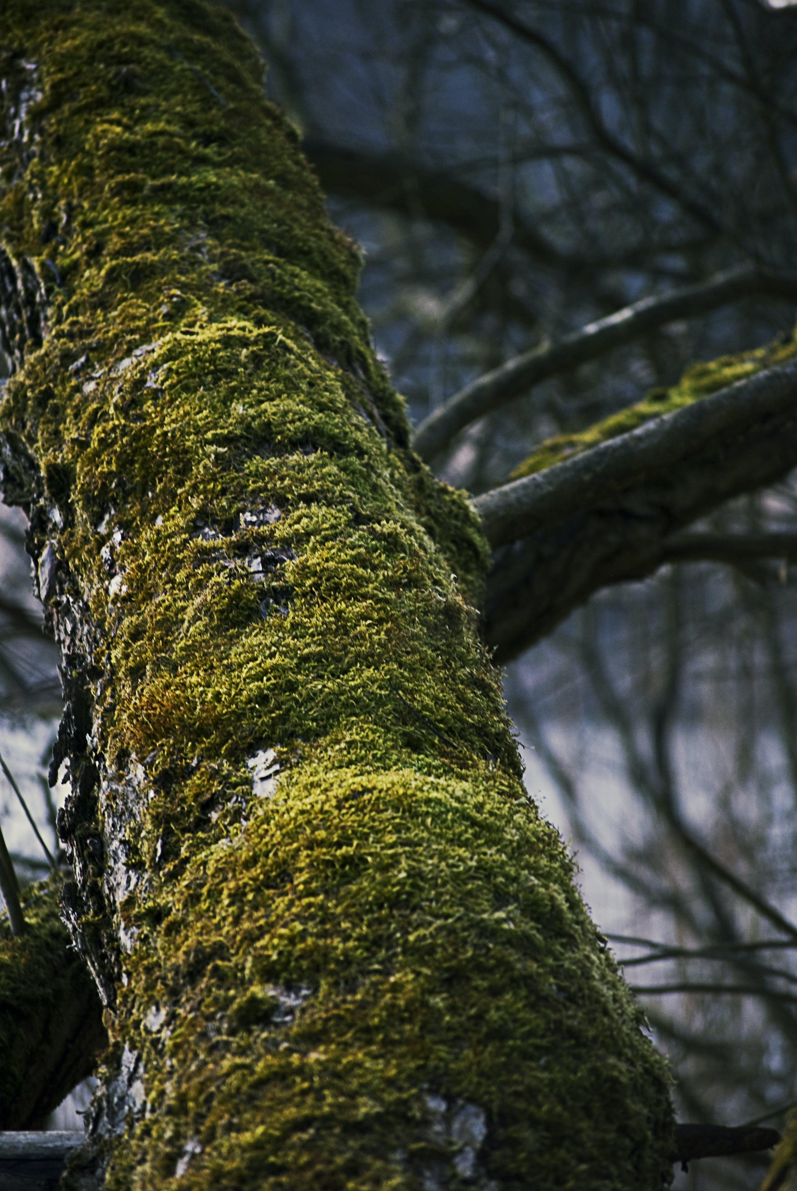 branch, moss, tree