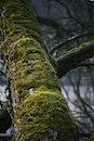 wood, moss, trunk