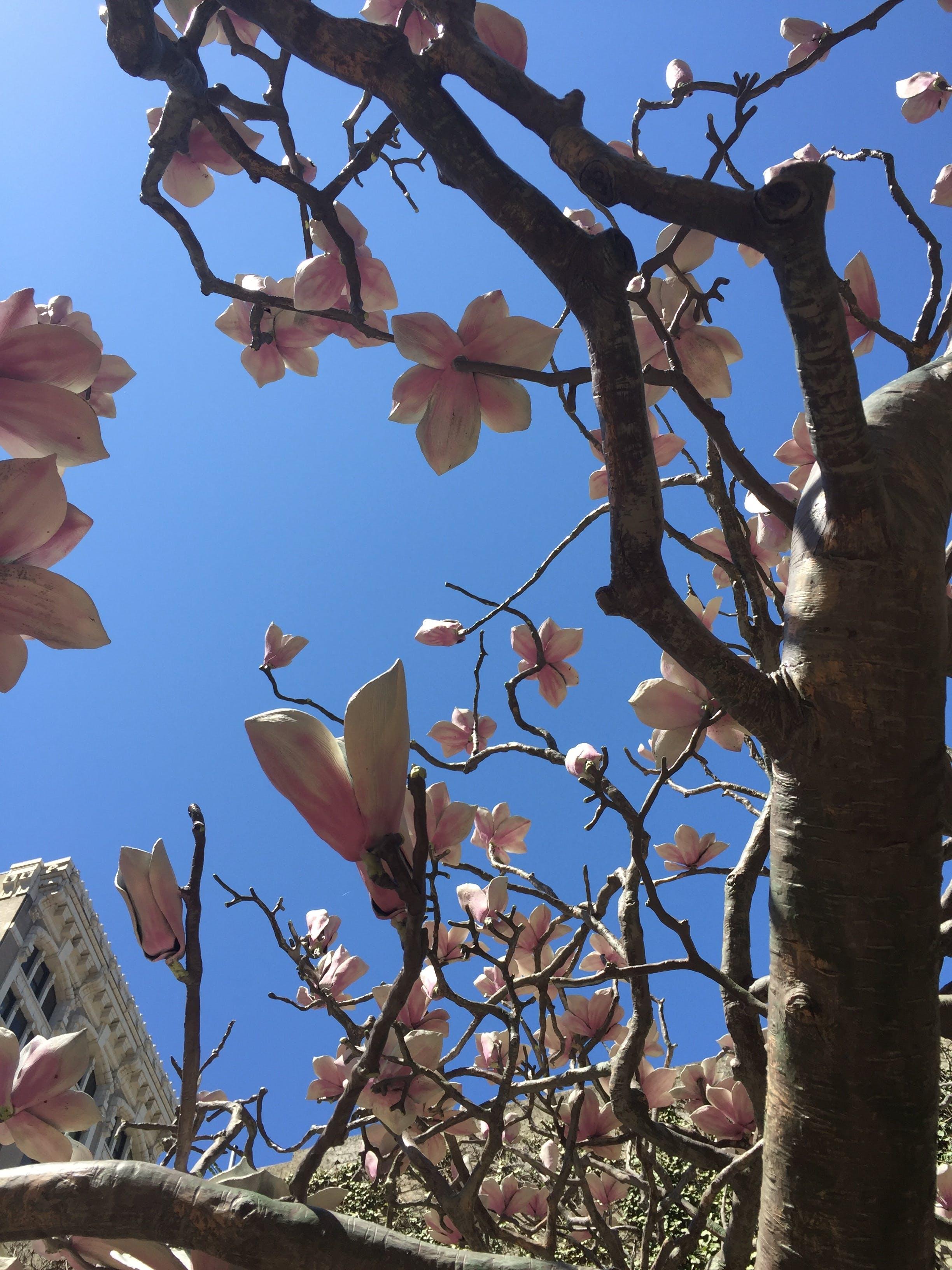 Free stock photo of sky, flowers, buildings, tree