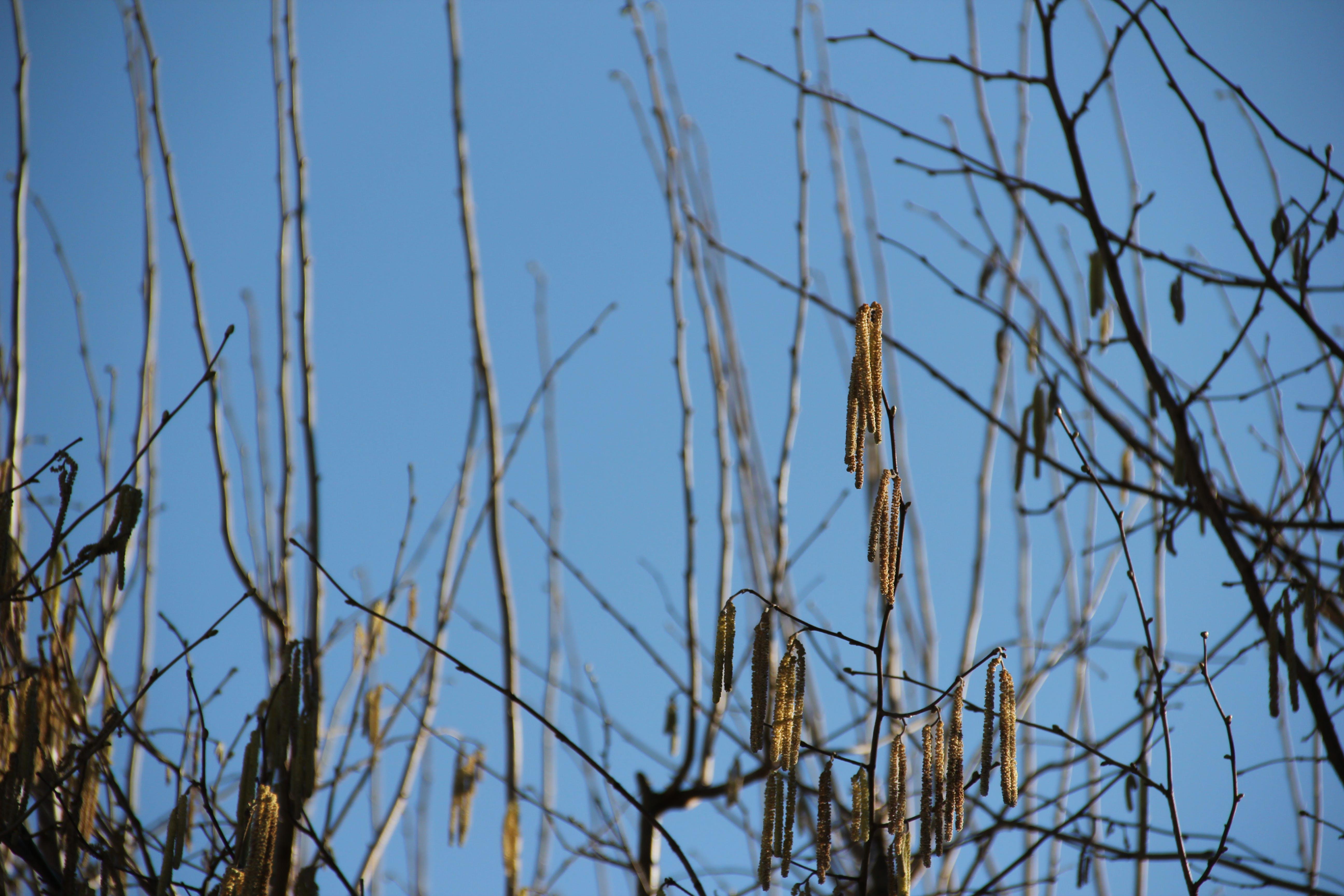 Free stock photo of birth, branch, bud, buds