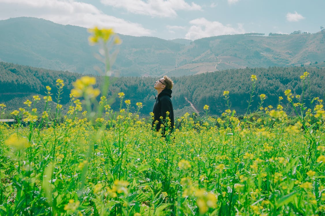 Man Standing on Yellow Bed of Flowers