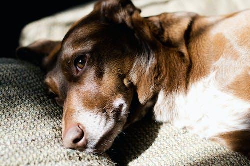 Close up Photo of a Dog