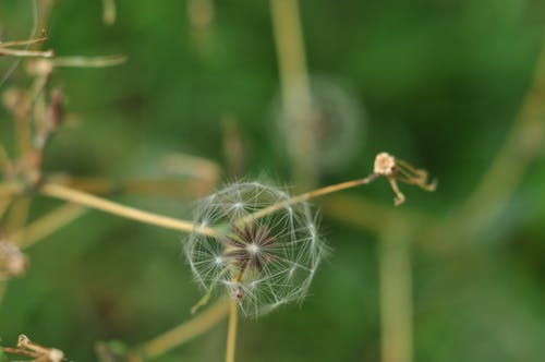 Δωρεάν στοκ φωτογραφιών με background, καλοκαιρινό λουλούδι, λουλούδι, φύση