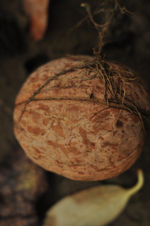 Δωρεάν στοκ φωτογραφιών με background, καρύδι, φουντούκια, φύση