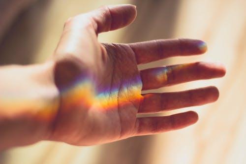 Základová fotografie zdarma na téma duha, lom světla, palma, připojení