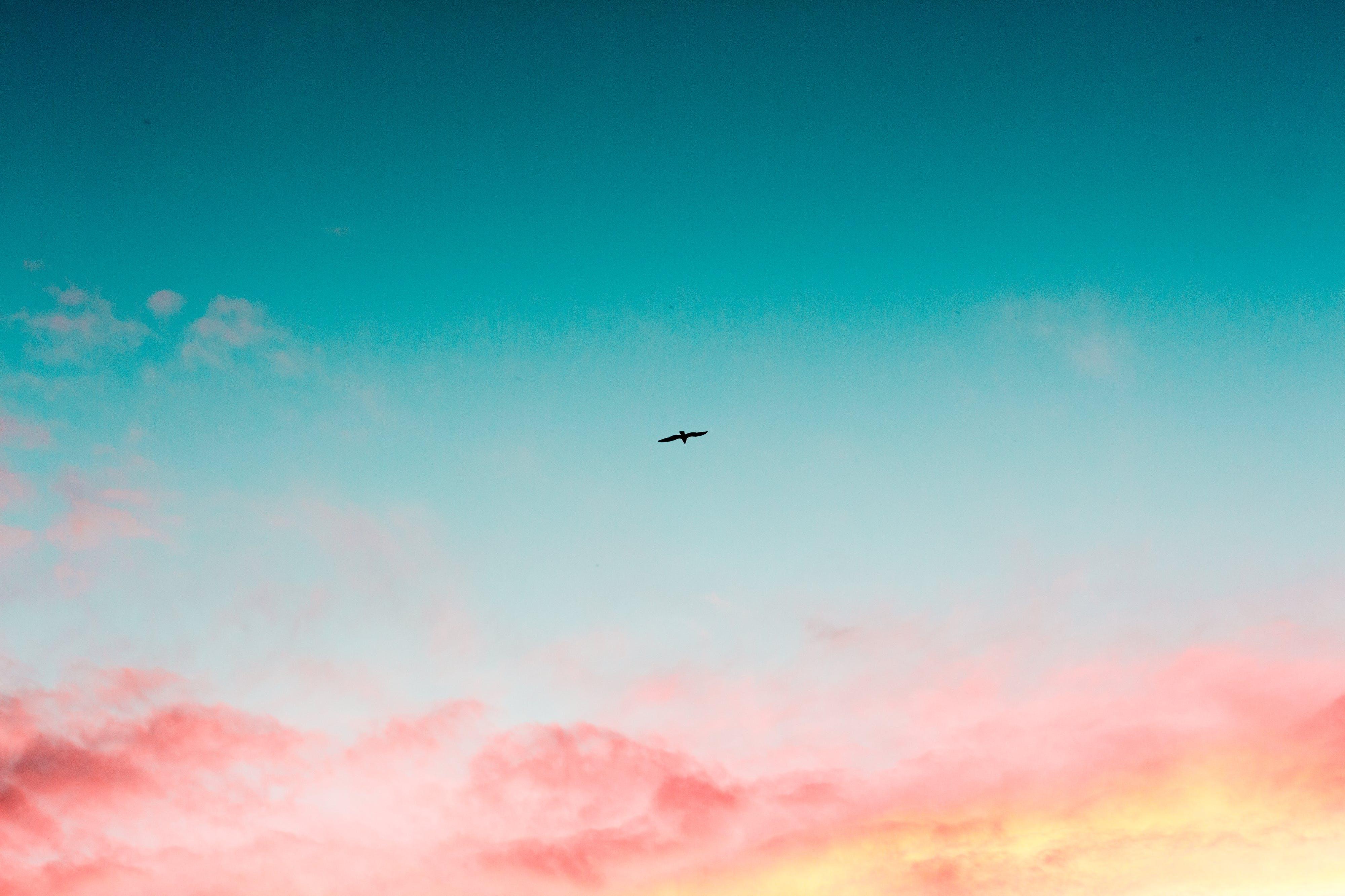 Foto d'estoc gratuïta de alba, animal, cel, fons de pantalla gratuït
