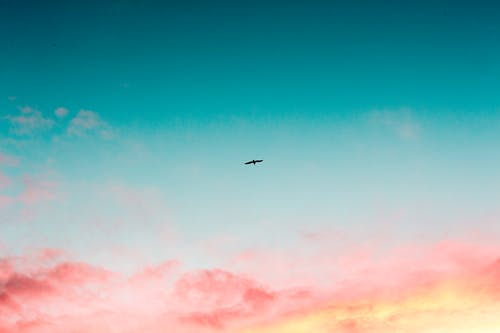 gökyüzü, gökyüzü resmi, gün doğumu, hayvan içeren Ücretsiz stok fotoğraf