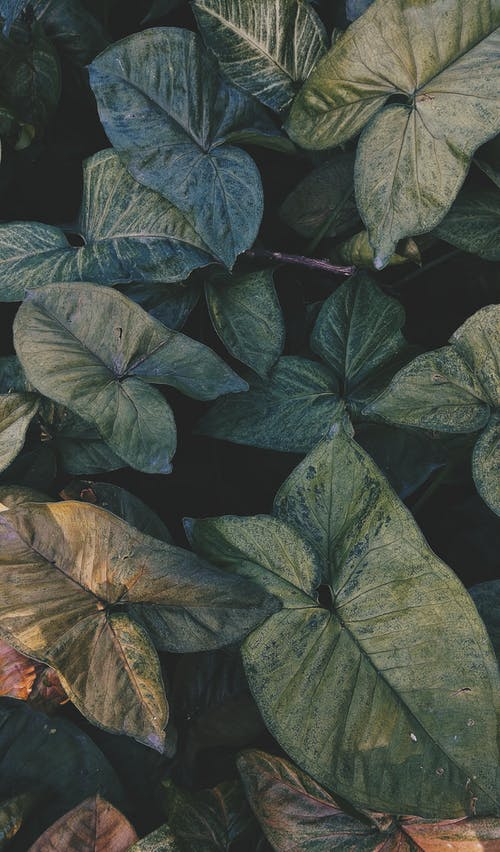 Free stock photo of colors, dark green, fall leaves, fresh flowers
