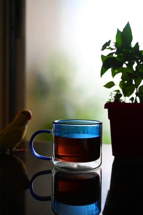 Foto profissional grátis de ave, azul, caneca