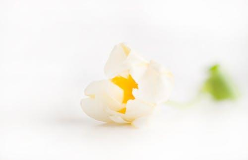 Δωρεάν στοκ φωτογραφιών με Ημέρα αγίου βαλεντίνου, λουλούδια, λουλουδιασμένος, μακροφωτογράφιση