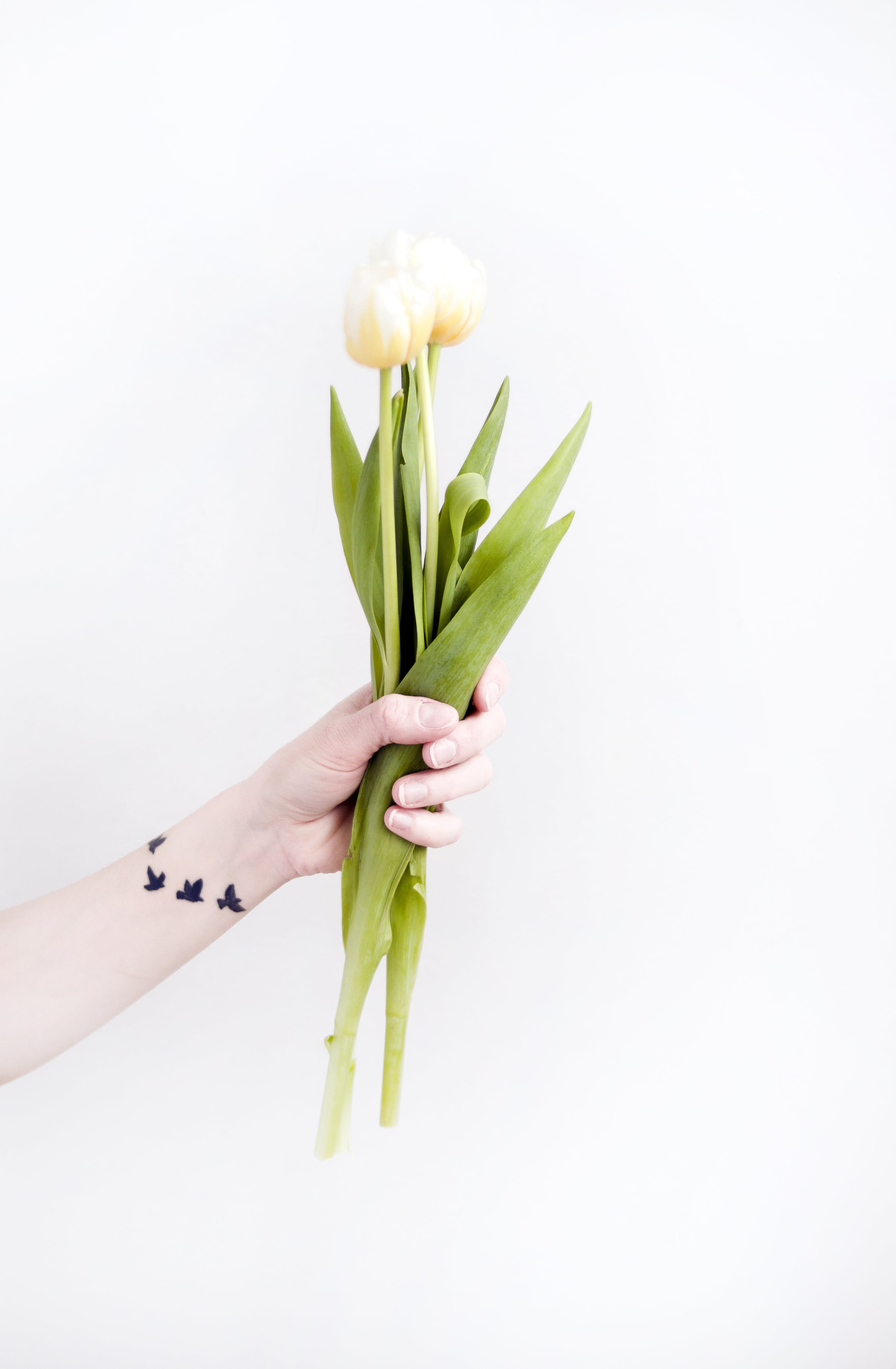 Person Holding Tulip Flowers