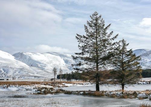Darmowe zdjęcie z galerii z drzewa, góry, śnieg, szkocja