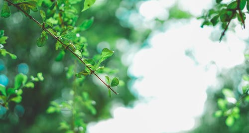 Бесплатное стоковое фото с фото природы, фотография sadeep sasanka