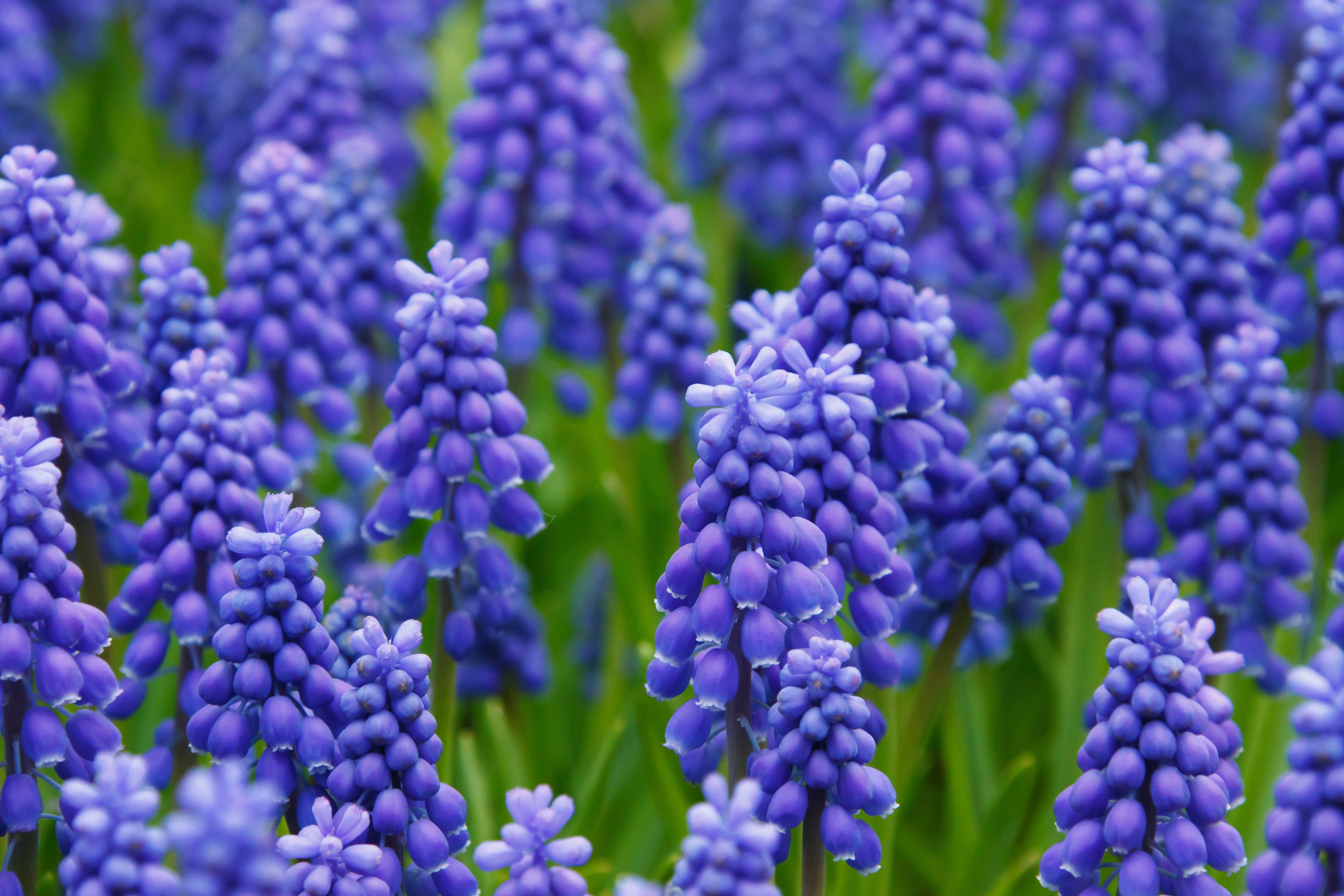 Purple Flower on Green Field