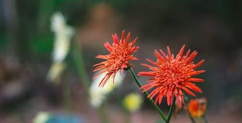 sadeep sasanka攝影, 自然攝影, 花 的 免費圖庫相片