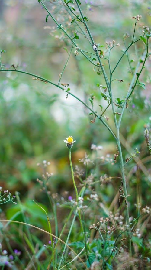 斯里蘭卡, 自然攝影, 花 的 免費圖庫相片