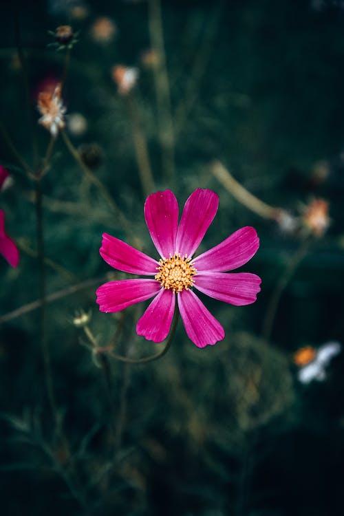 Photos gratuites de centrale, fleur, fleurir