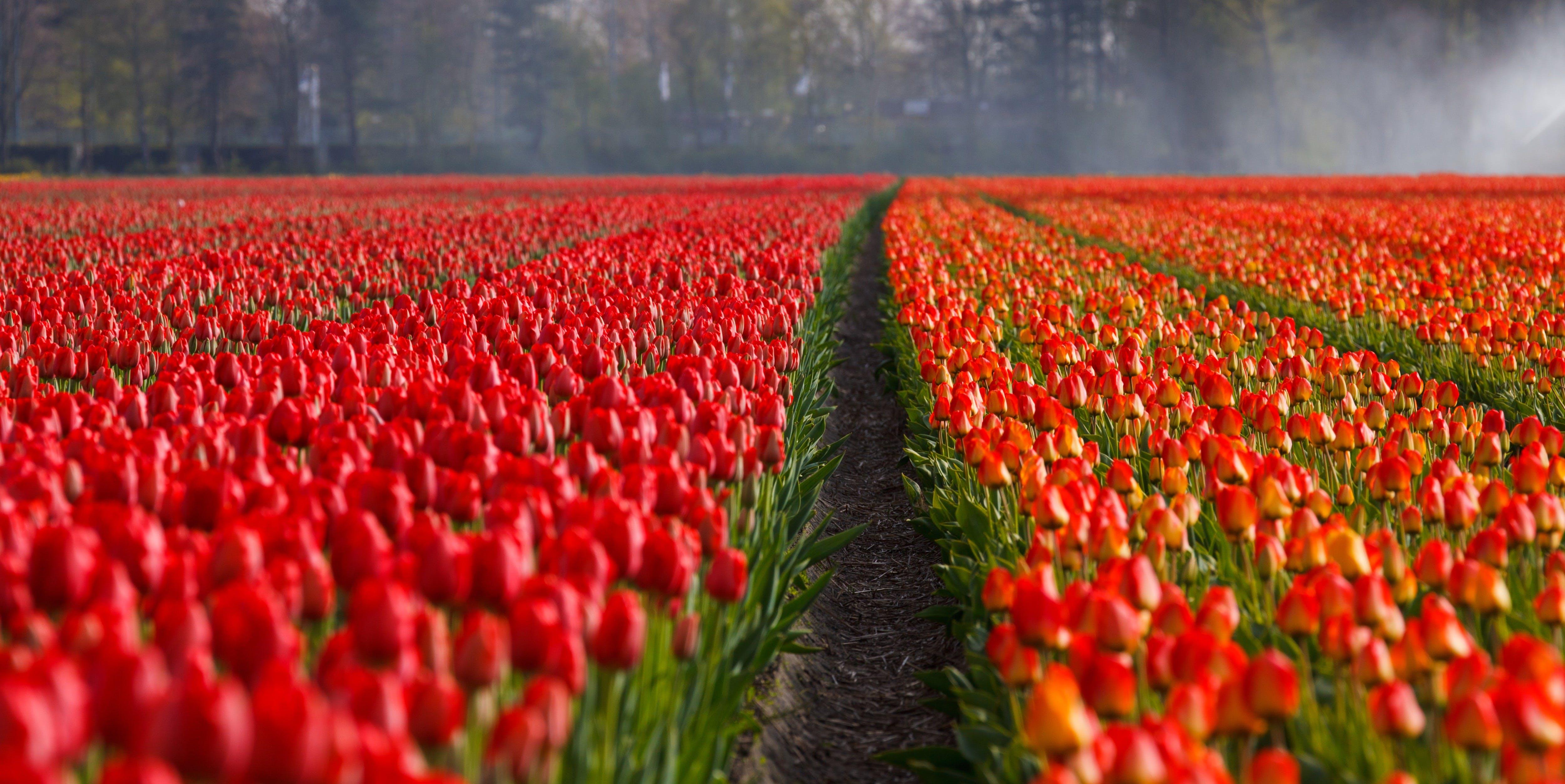 Gratis stockfoto met bloeien, bloemen, bloesem, flora