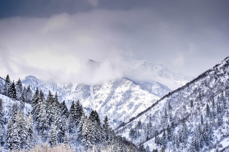 Fotos de stock gratuitas de alpino, alto, arboles, aventura