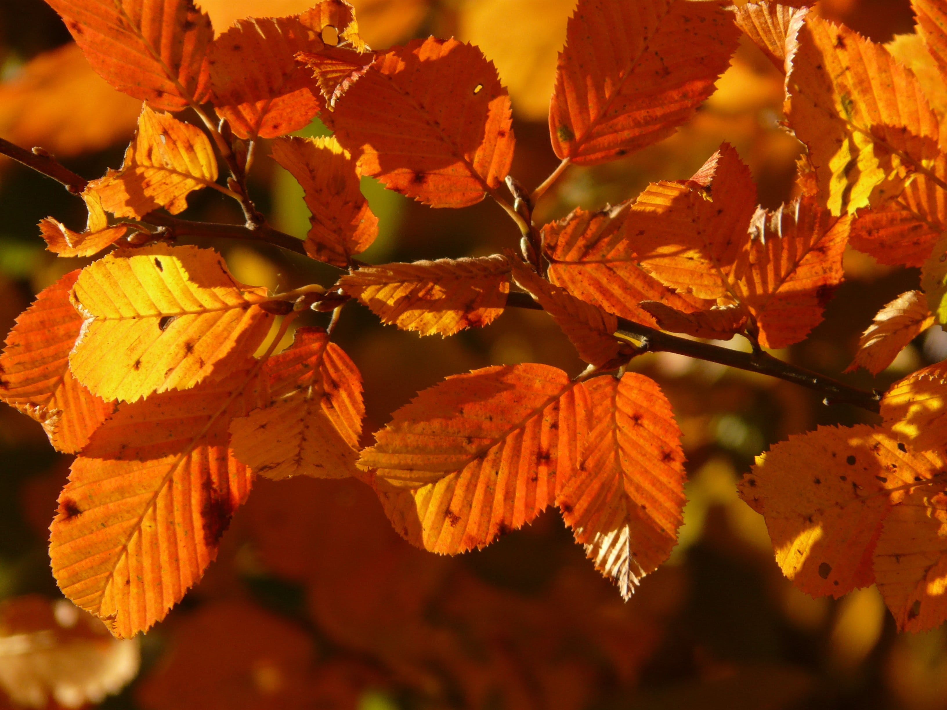 Free stock photo of autumn, autumn forest, colorful, fall foliage