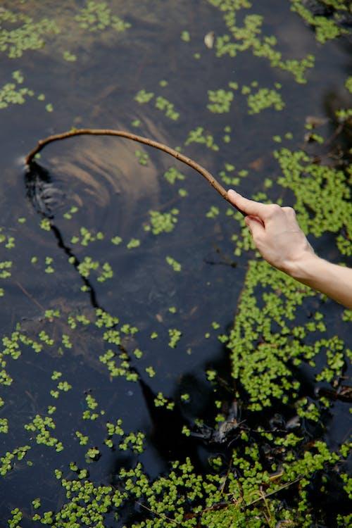 Бесплатное стоковое фото с водоем, дерево, держать