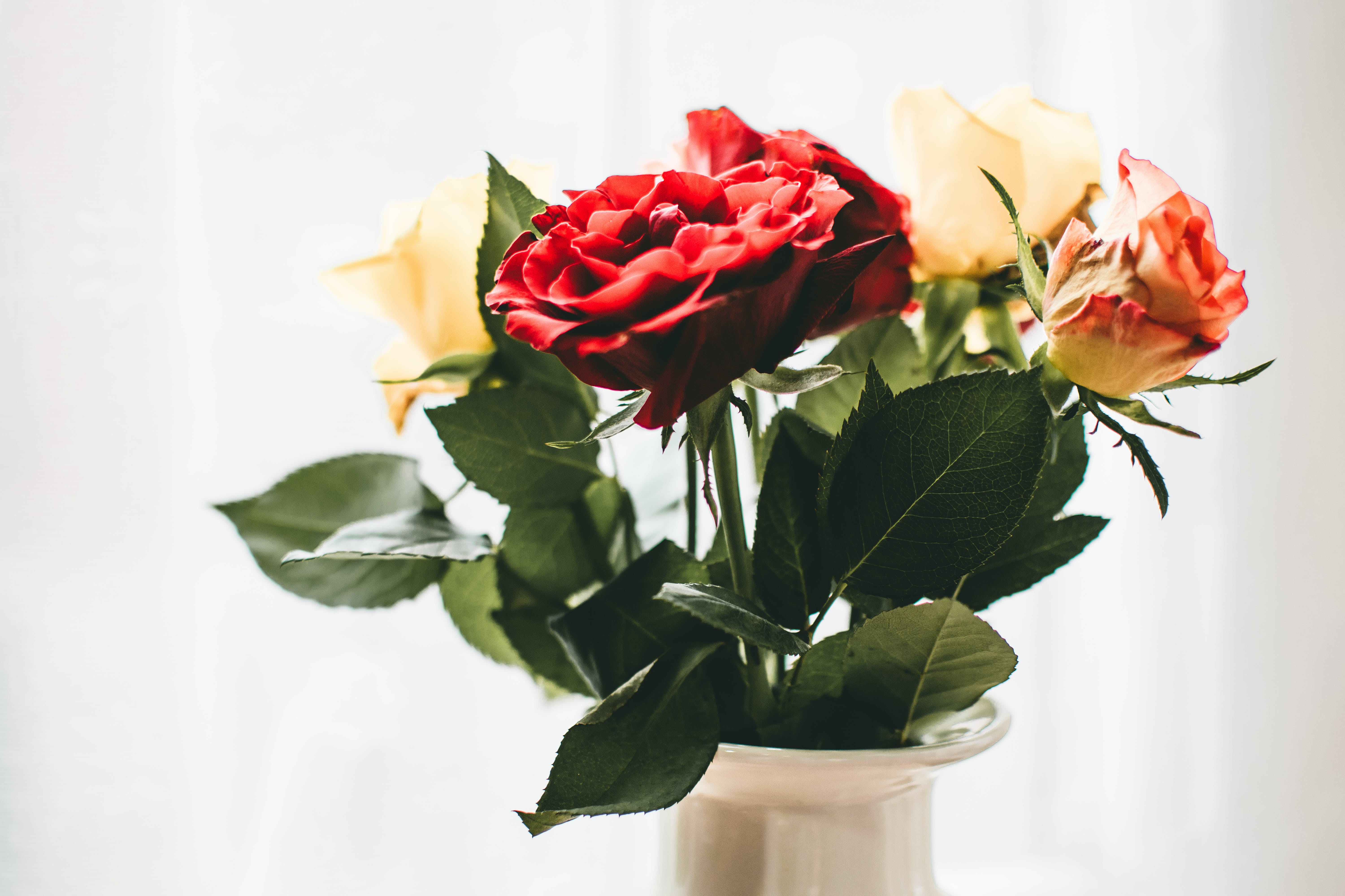 Red and White Flowers With White Vase