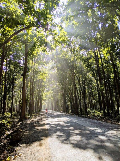 Ingyenes stockfotó árnyékok, aszfalt, erdő témában